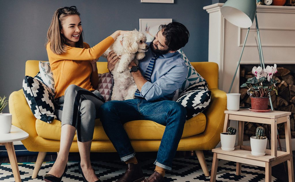 Young sharp-dressed couple playing with a cute dog on a vibrant yellow couch